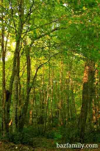 Longoz Ormanı 3